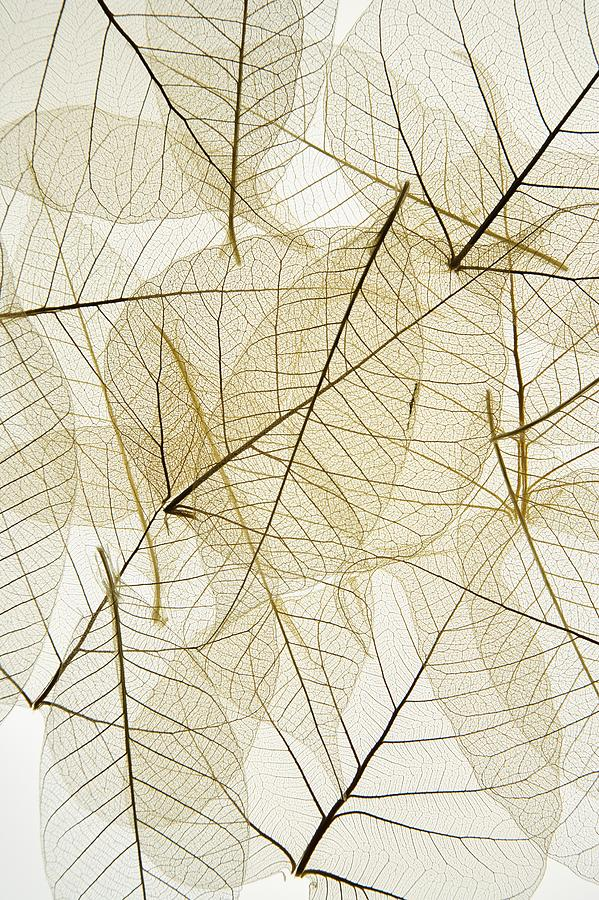 Layered Leaves Photograph