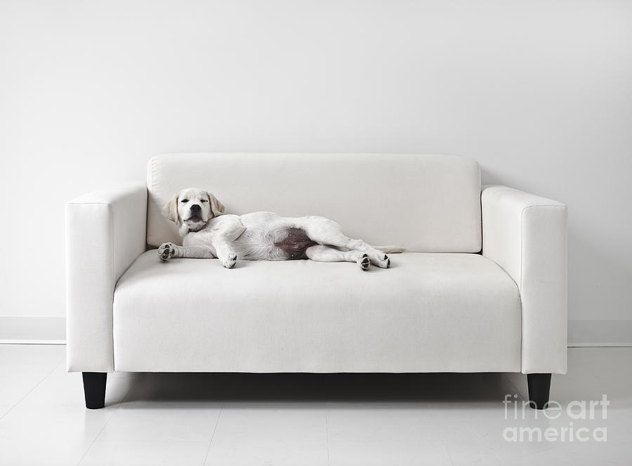 Dog Photograph - Lazy Dog On The Sofa by Diane Diederich