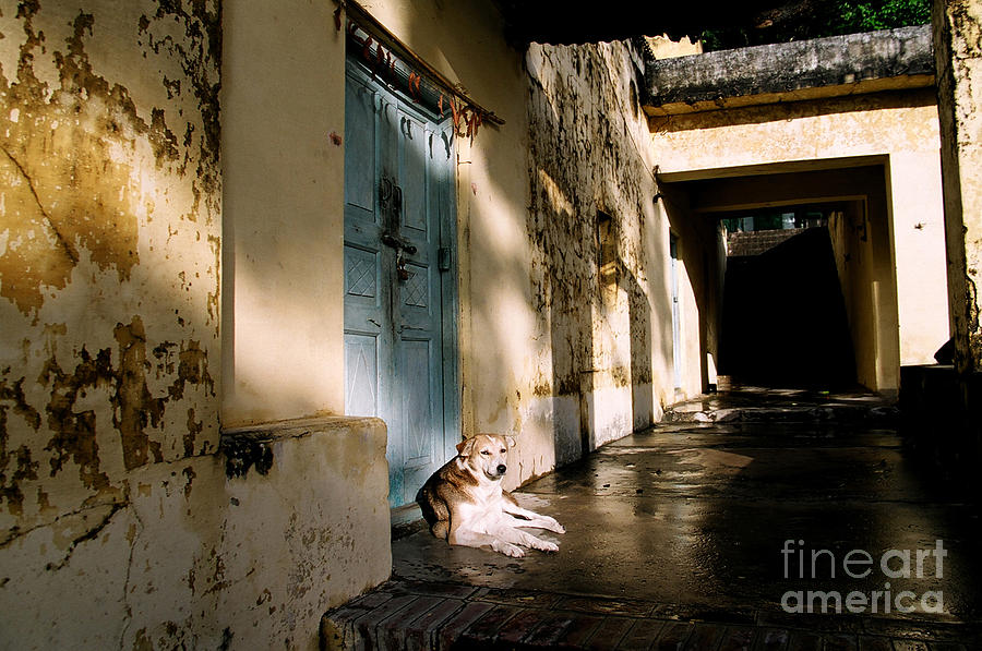 Real Estate Photograph - Lazy Dog Resting In The Afternoon by Eldad Carin