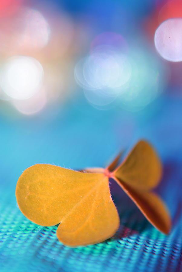 Le Papillon - The Butterfly - 21 Photograph