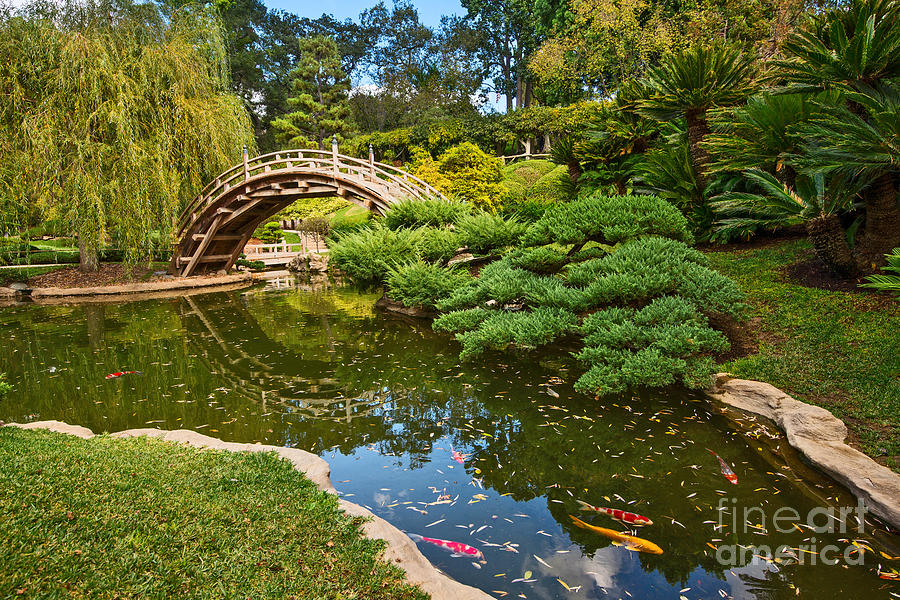 Lead The Way The Beautiful Japanese Gardens At The Huntington Library With Koi Swimming