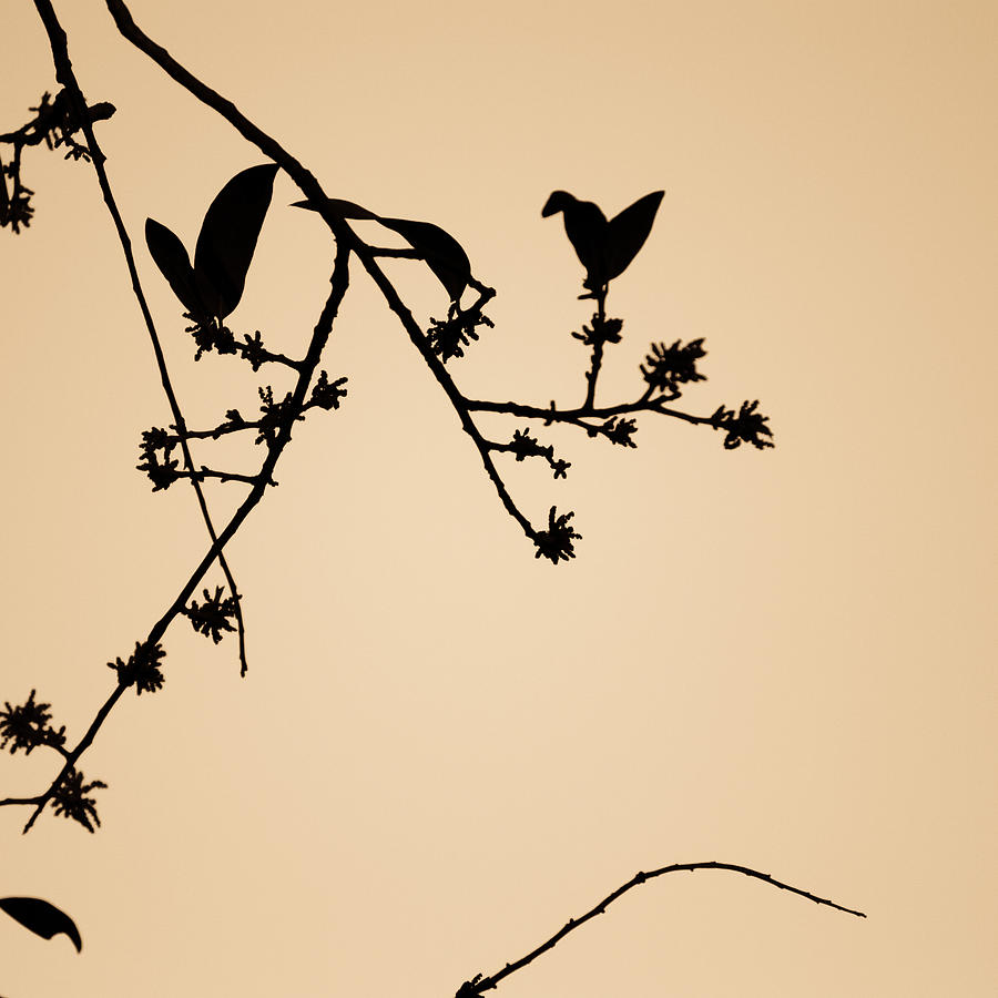 Leaf Birds Photograph