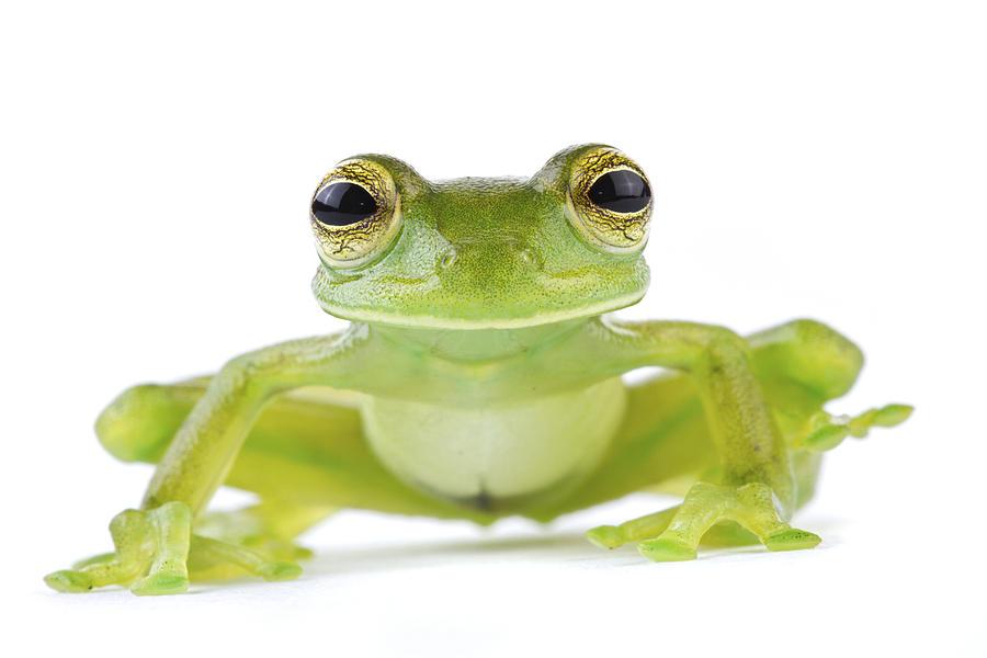 Leaf Frog Tapanti Costa Rica Photograph