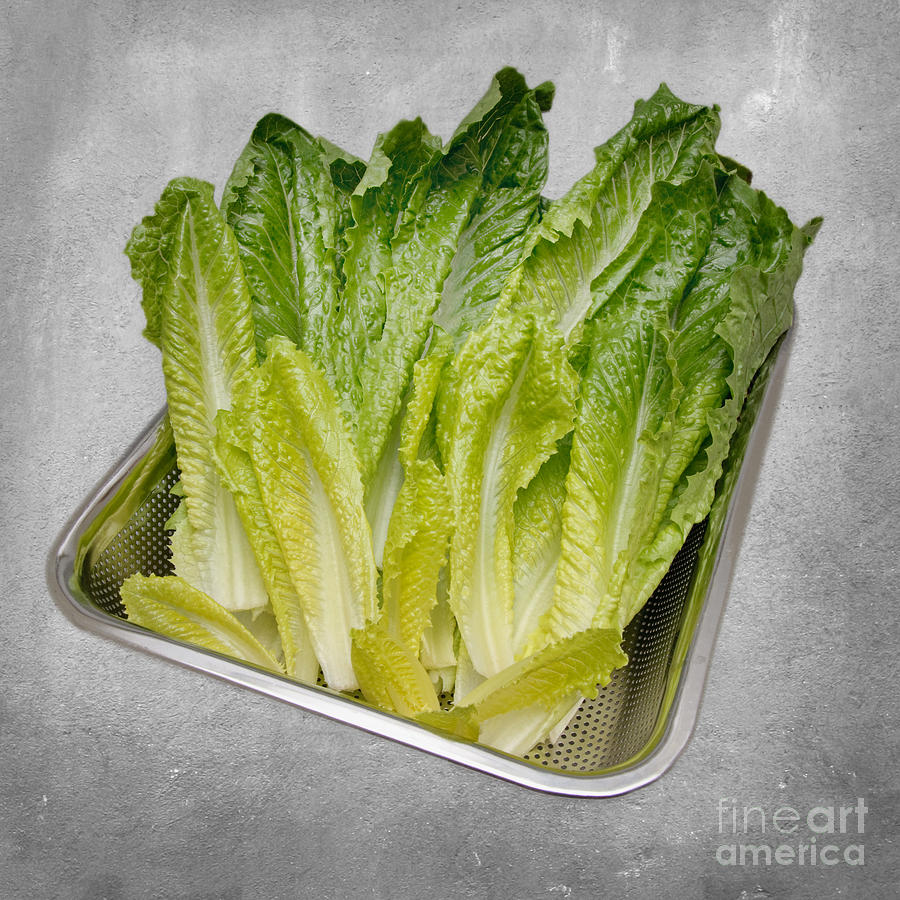 Leaf Lettuce Mixed Media  - Leaf Lettuce Fine Art Print