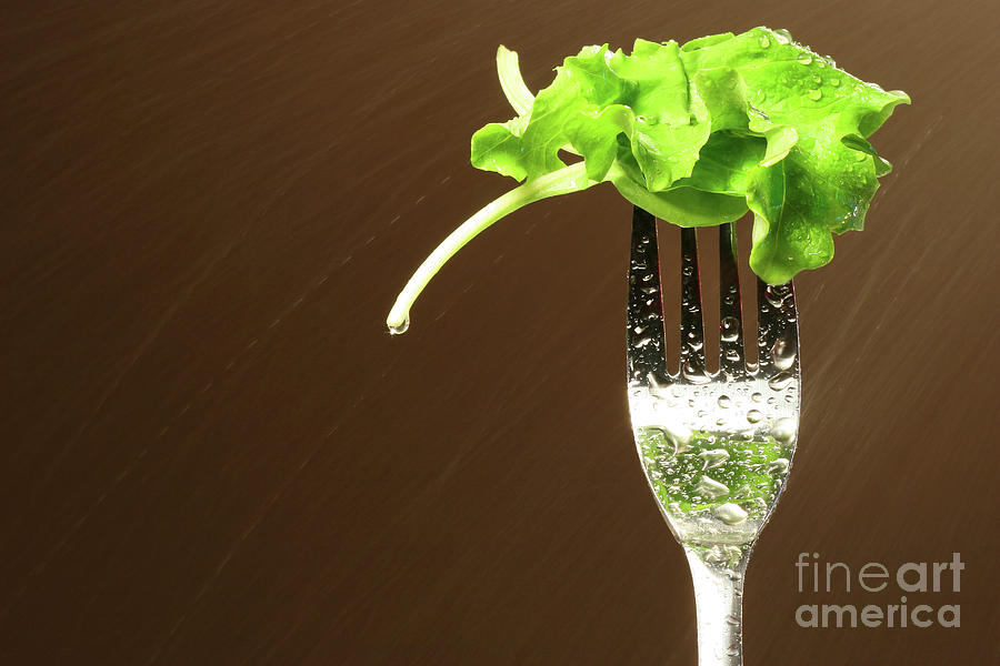 Leaf Of Lettuce On A Fork Photograph  - Leaf Of Lettuce On A Fork Fine Art Print
