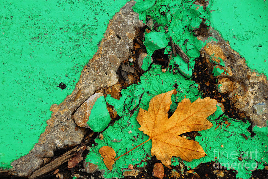 Leaf On Green Cement Photograph