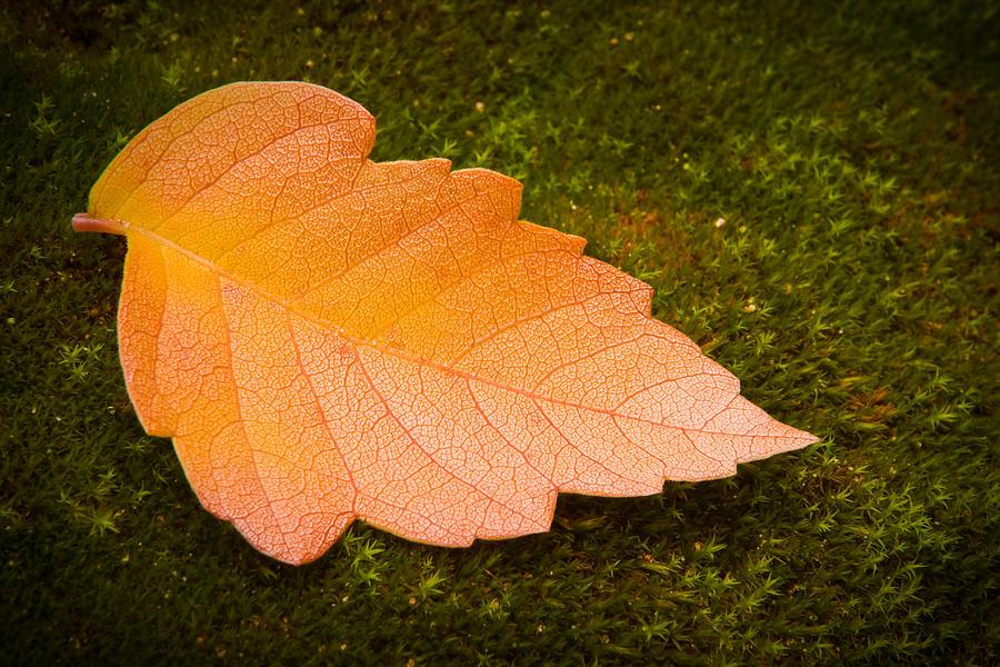 Leaf On Moss Photograph