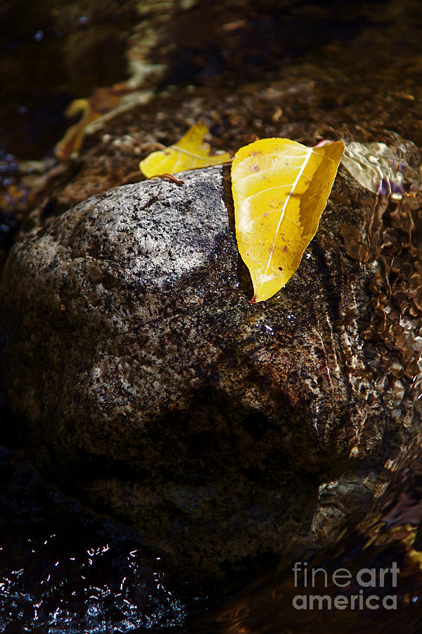 Leaf On Rock Photograph