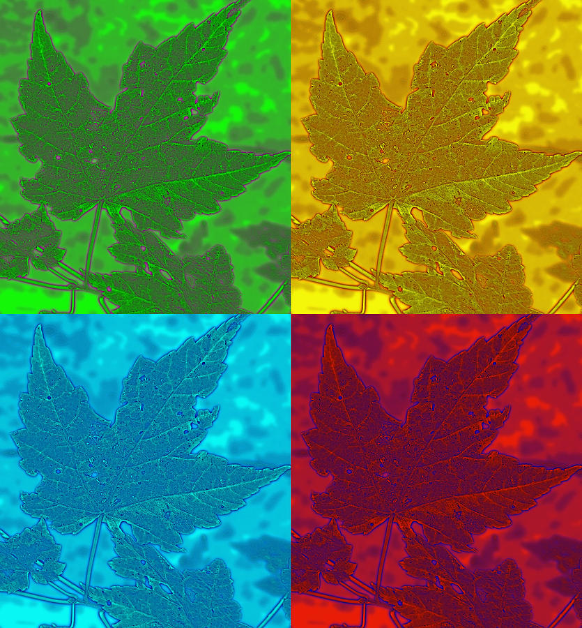 Leaf Pop Art Photograph  - Leaf Pop Art Fine Art Print