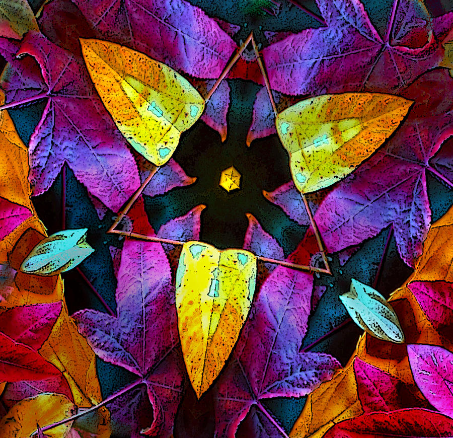 Leaf Triangle Photograph