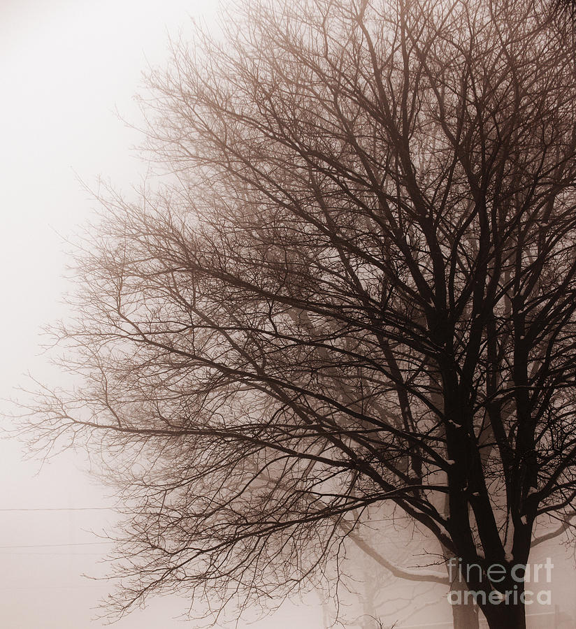 Leafless Tree In Fog Photograph