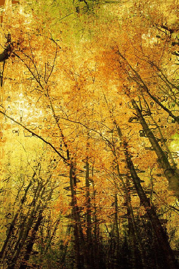 Leafy Canopy Iv Photograph