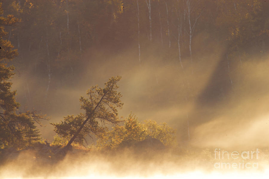 Leaning Tree In Swirling Fog Photograph  - Leaning Tree In Swirling Fog Fine Art Print