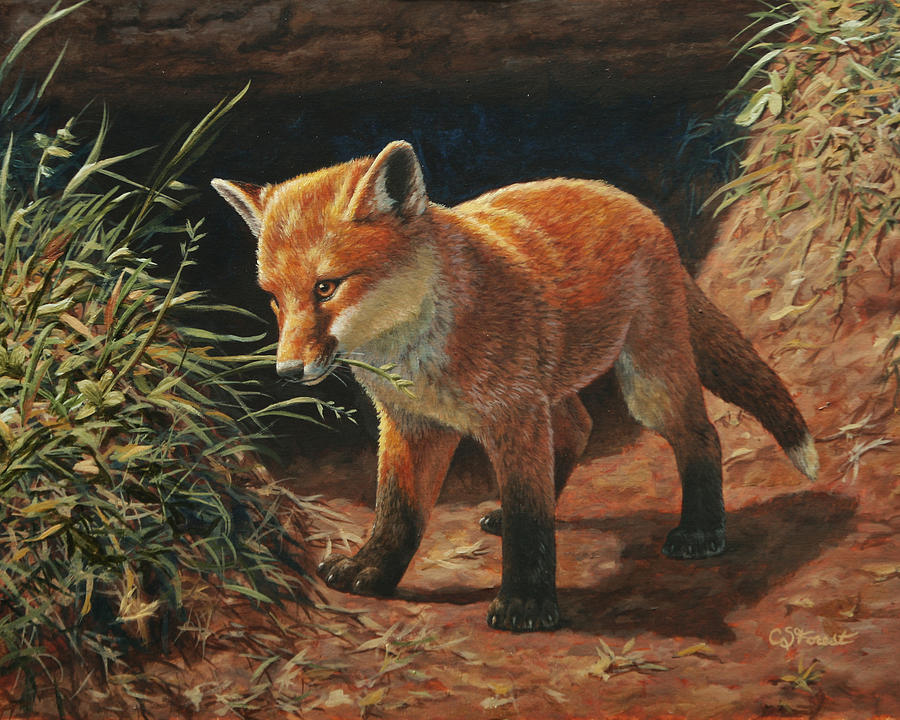 Fox Painting - Red Fox Pup - Learning by Crista Forest