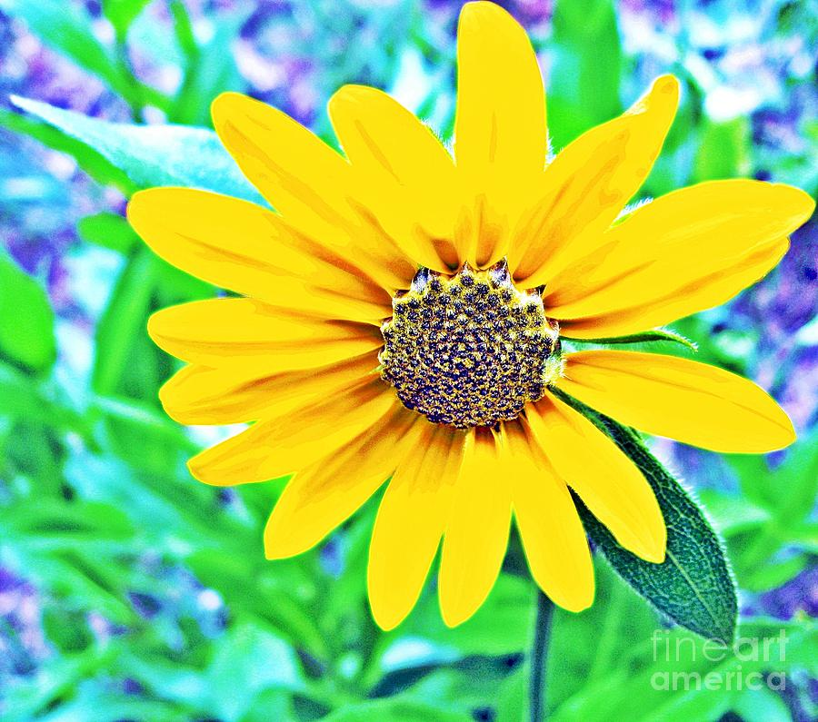 Leavenworth Flower Photograph