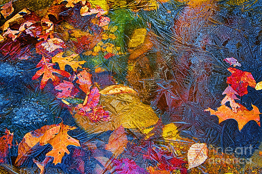 Leaves In Ice Photograph  - Leaves In Ice Fine Art Print