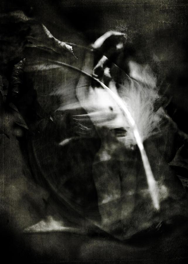 Leda Photograph - Leda And The Swan by Rebecca Sherman