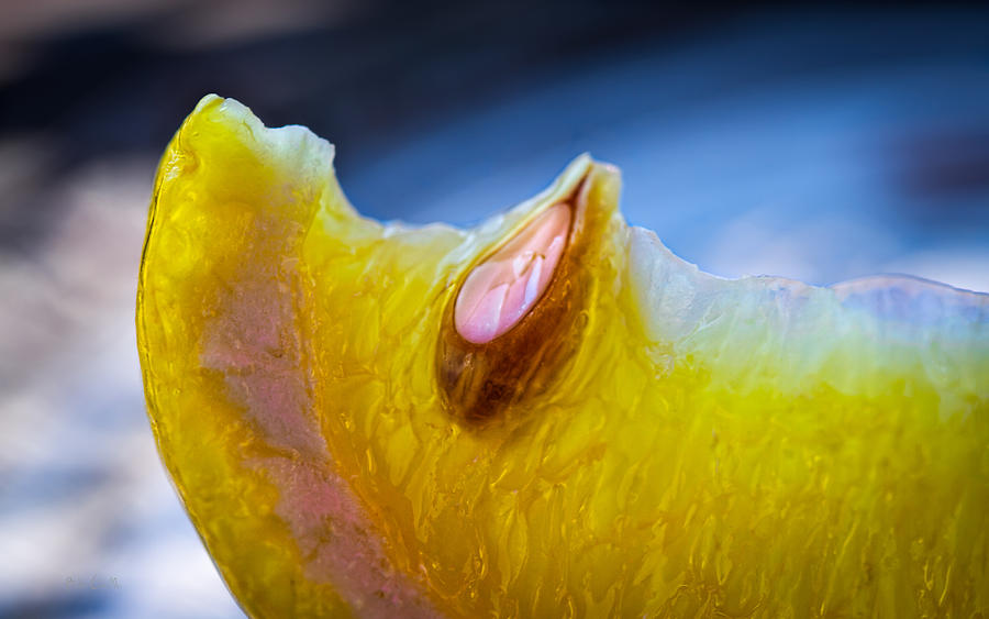 Lemon Photograph - Lemon Seed by Bob Orsillo