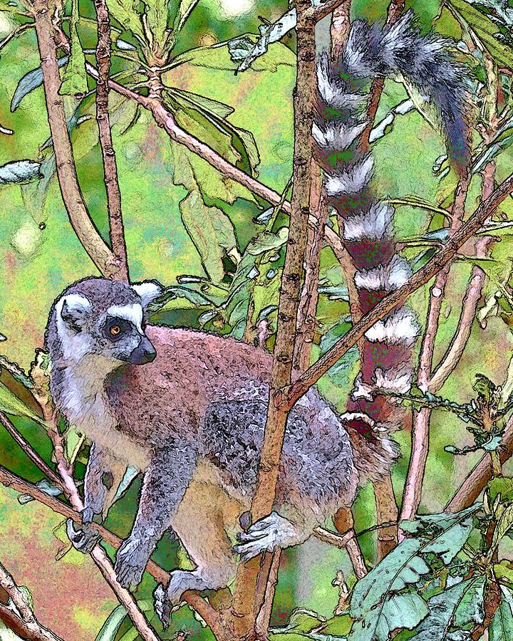 Lemur Sketch Photograph