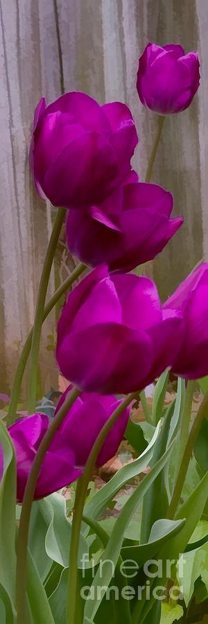 Lenten Glory Photograph