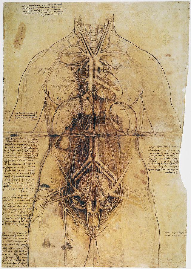 1510 Photograph - Leonardo: Anatomy, C1510 by Granger