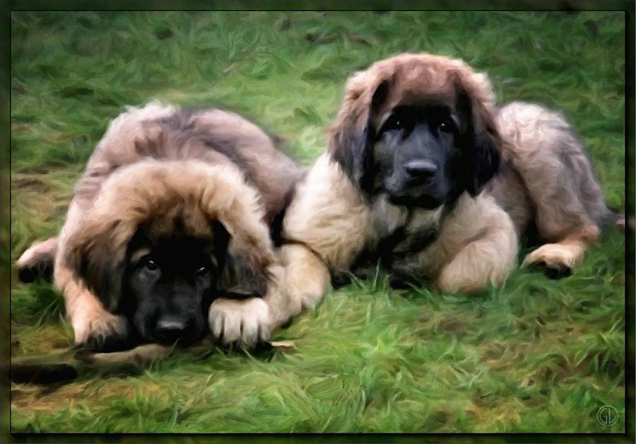 Leonberger Puppies Digital Art  - Leonberger Puppies Fine Art Print