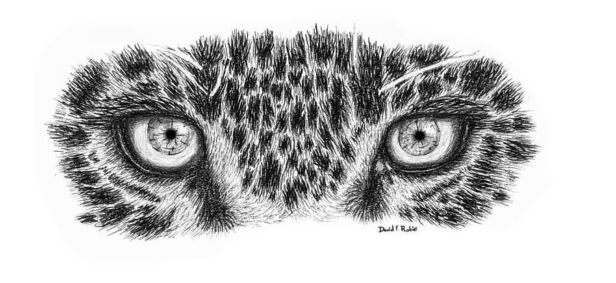 Leopard Eyes Print Drawing By David Rabie