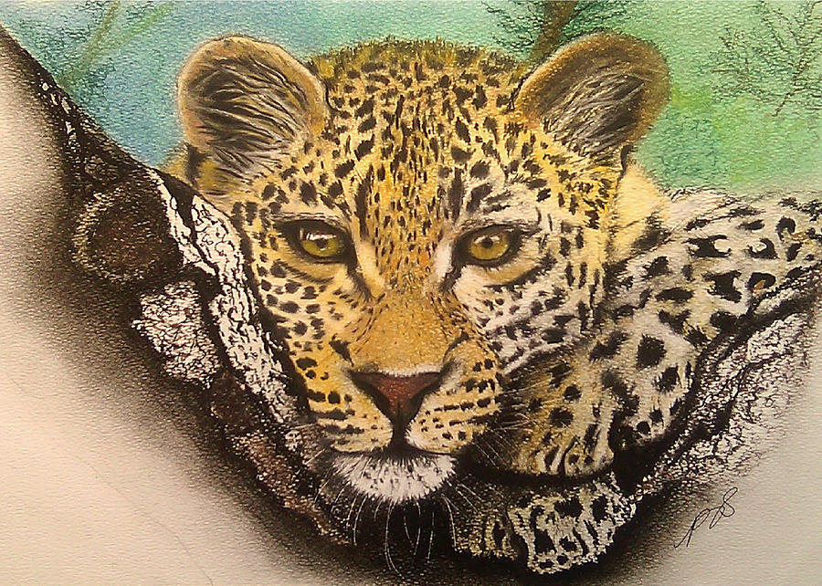 Leopard In A Tree I. Drawing  - Leopard In A Tree I. Fine Art Print