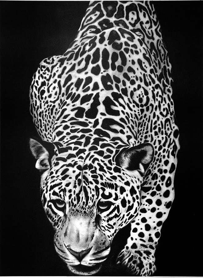 Black And White Leopard Print Drawing | www.imgkid.com ...