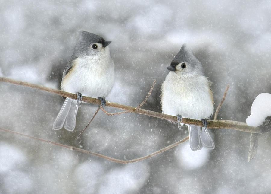 Bird Photograph - Let It Snow by Lori Deiter