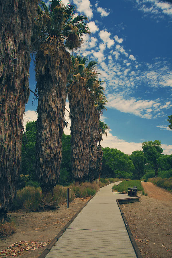 Big Morongo Canyon Preserve Photograph - Lets Walk This Path Together by Laurie Search