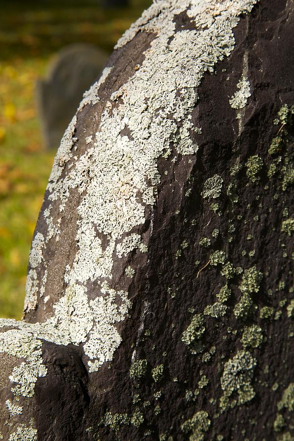 Lichen On Headstone Photograph