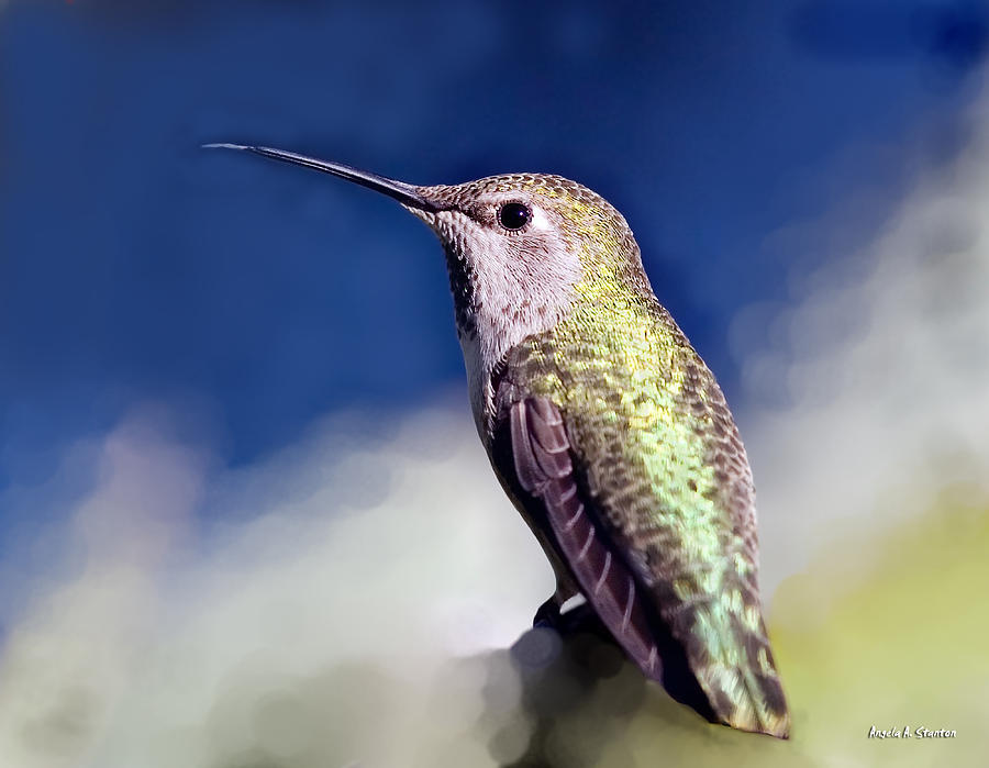 Hummingbird Mixed Media - Lick Your Lips by Angela A Stanton