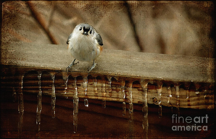 Titmouse Photograph - Life Can Be Tough by Lois Bryan