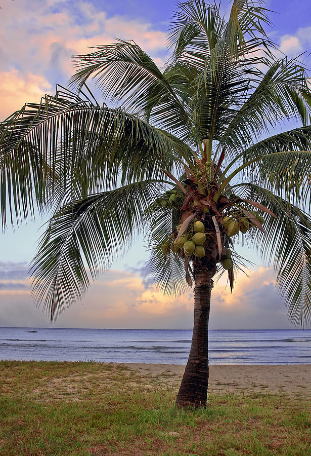 Life Is A Beach Photograph