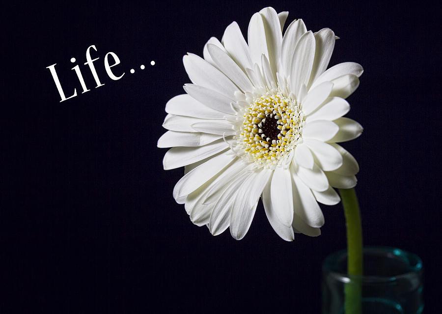 Life Photograph