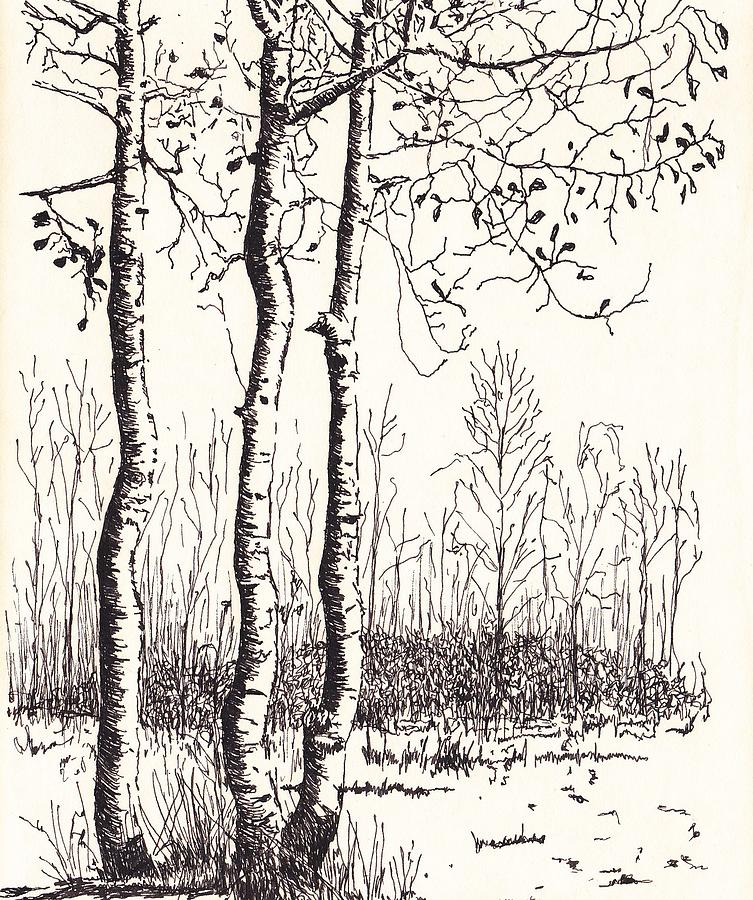 Lifes A Birch Drawing