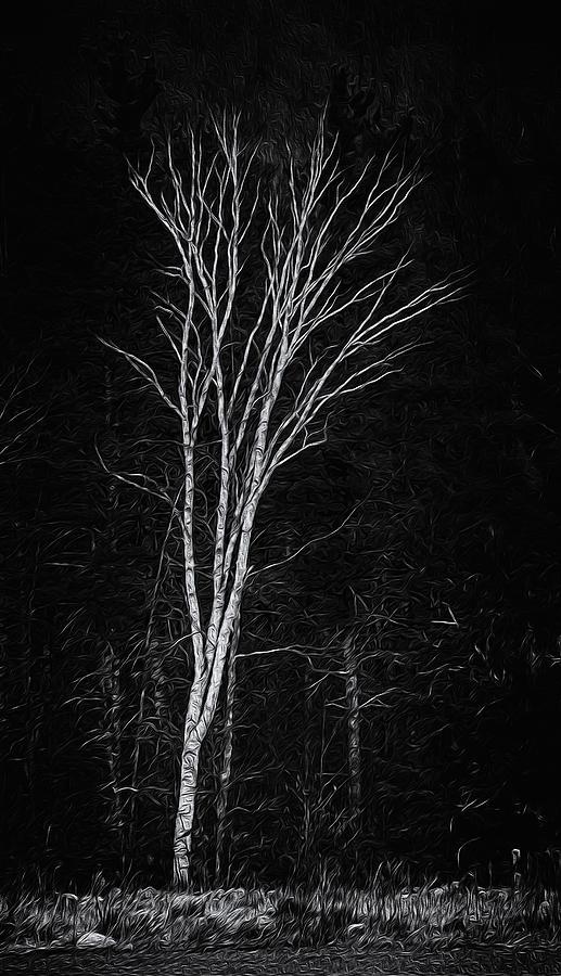 Lifes A Birch No.2 Photograph