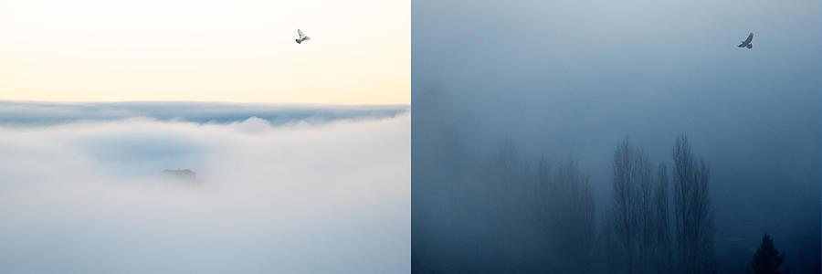 Lisa Knechtel Photograph - Light And Dark by Lisa Knechtel