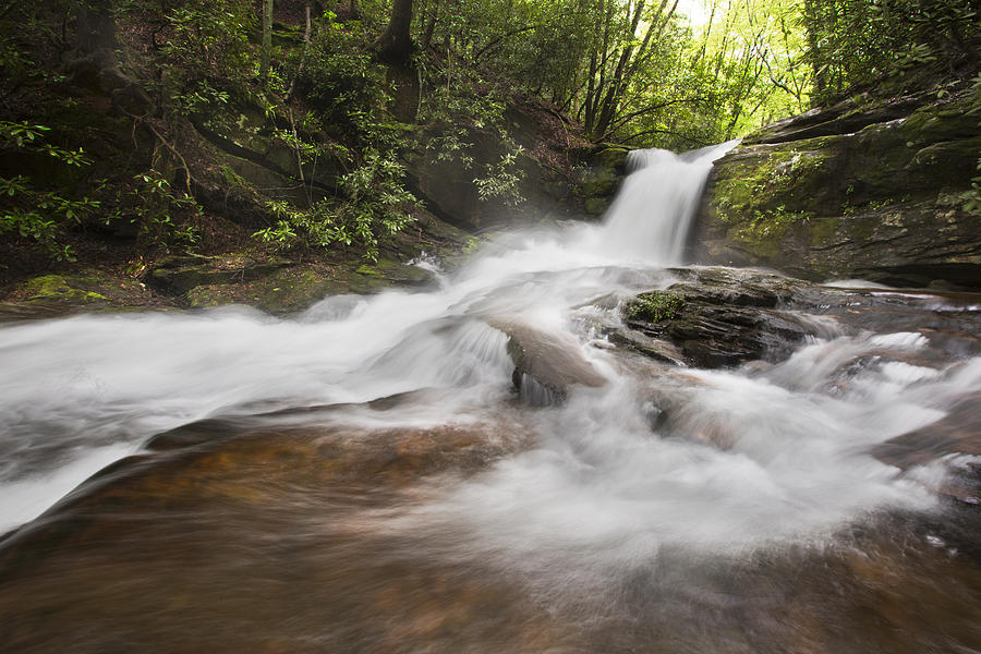Appalachia Photograph - Light In The Forest by Debra and Dave Vanderlaan