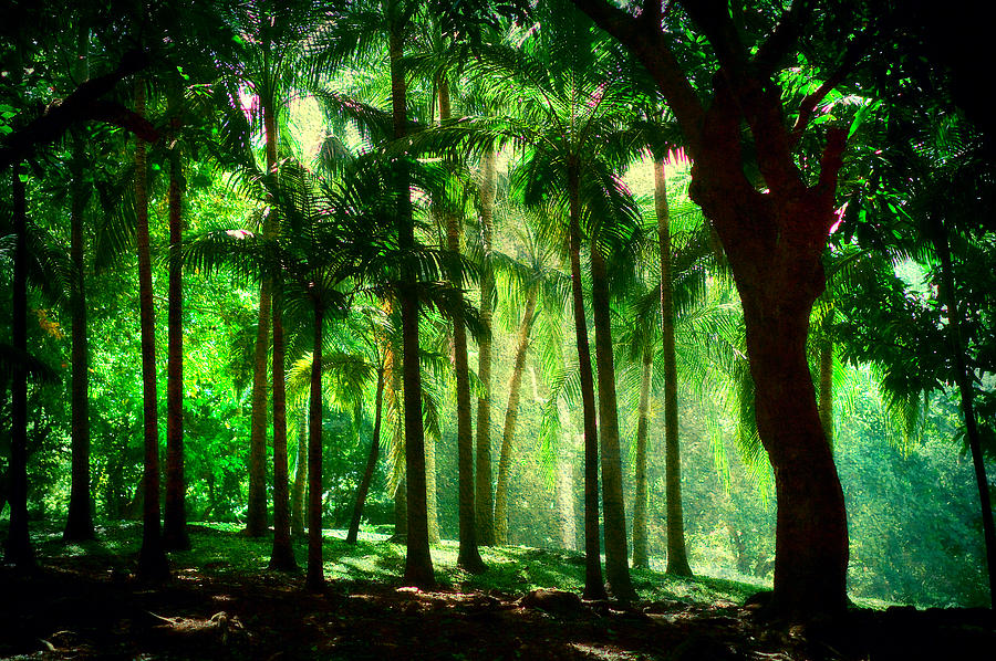 Mauritius Photograph - Light In The Jungles. Viridian Greens. Mauritius by Jenny Rainbow