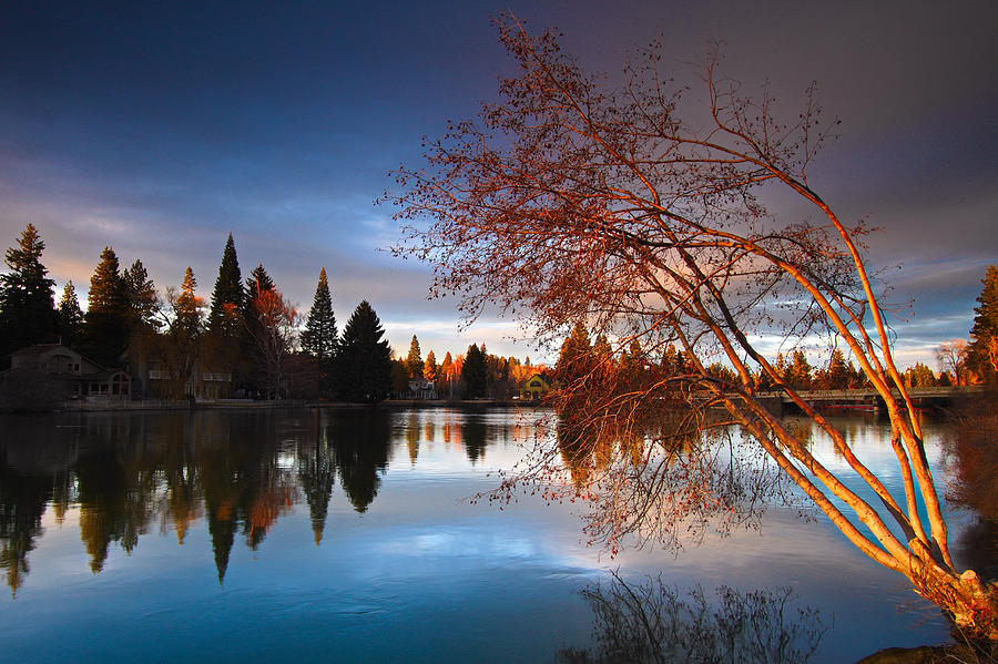 Lighted Tree Photograph