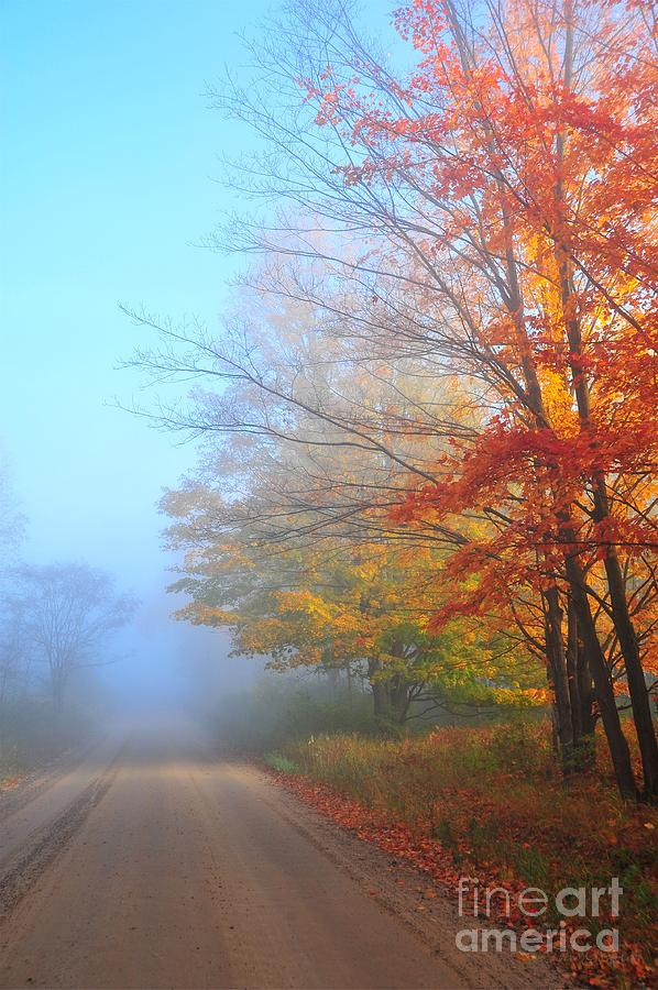 Lighting The Way In The Fog Photograph