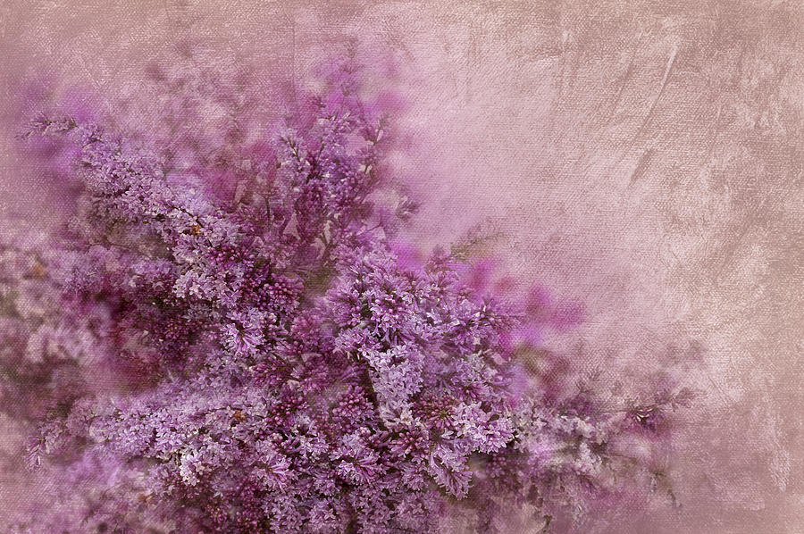 Abstract Digital Art - Lilac Splash by Svetlana Sewell