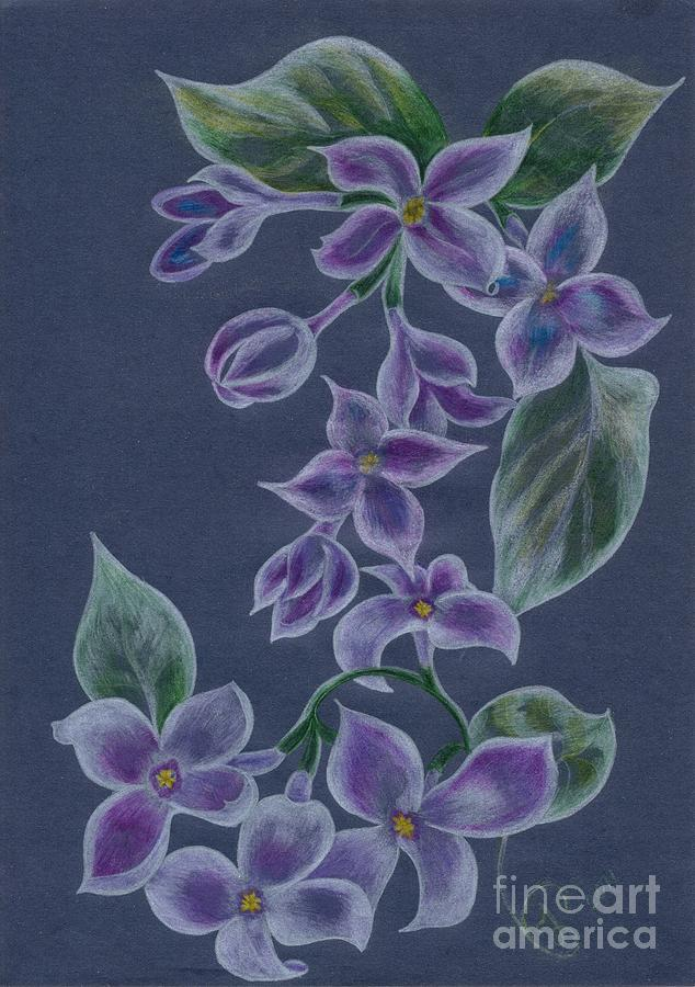 Lilacs II Drawing  - Lilacs II Fine Art Print