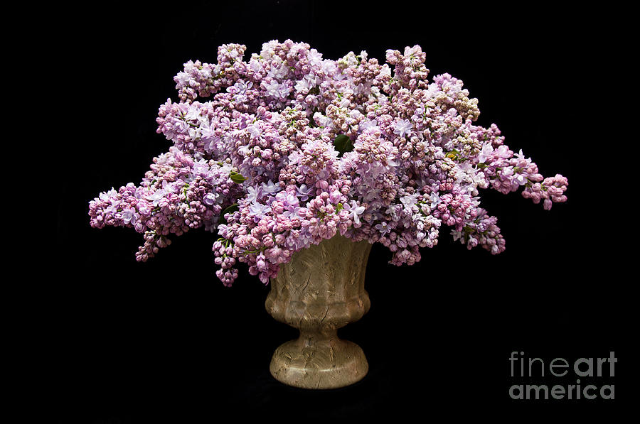 Lilacs In A Green Vase - Flowers - Spring Bouquet Photograph by Andee ...