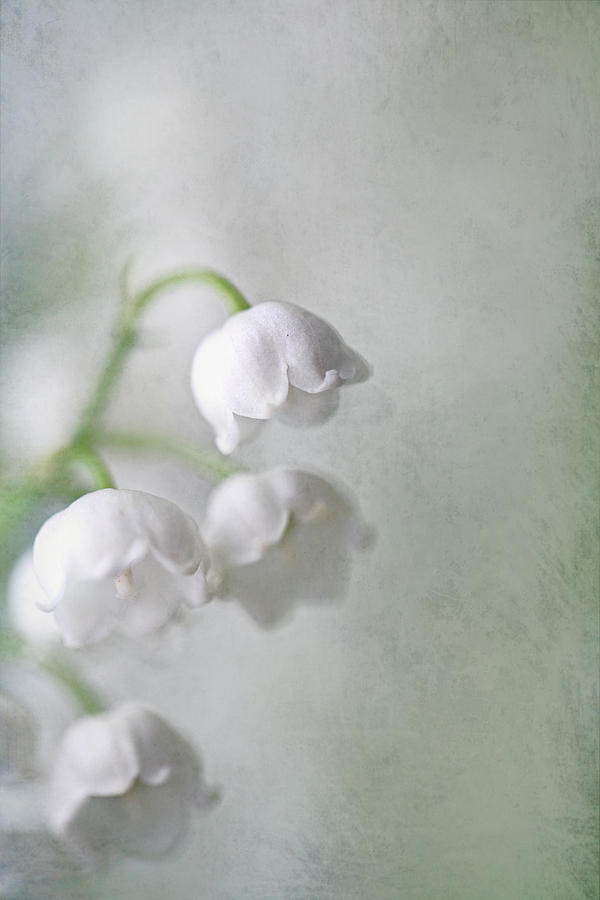 Floral Photograph - Lilies Of The Valley by Annie Snel
