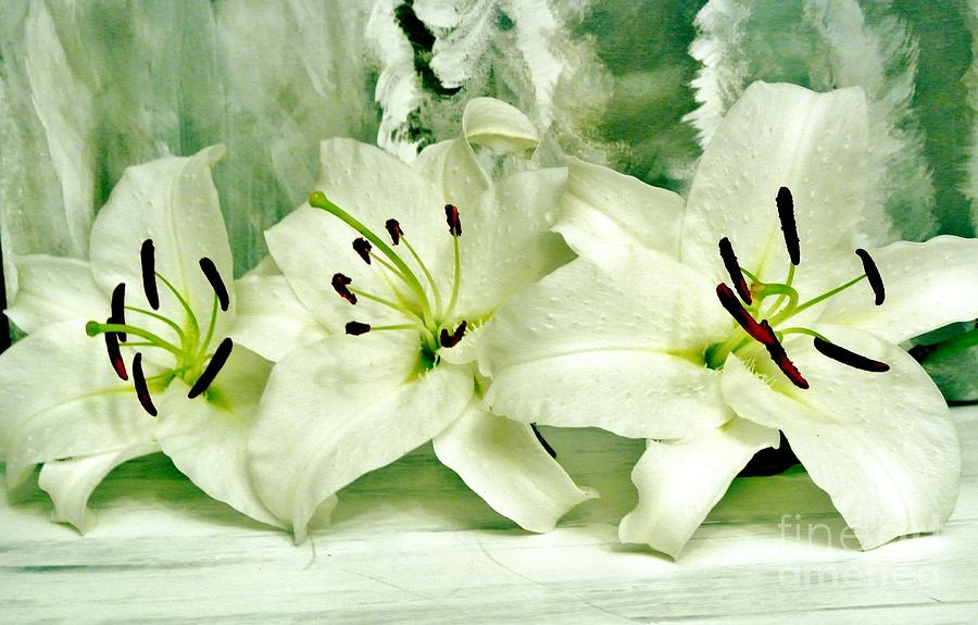 Lily Family Photograph