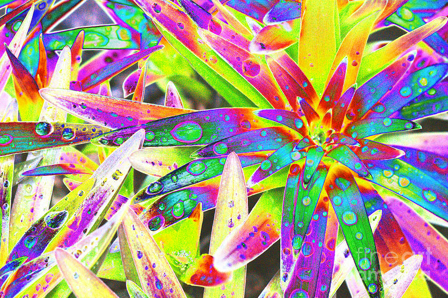 Lily Leaves Raindrops Digital Art