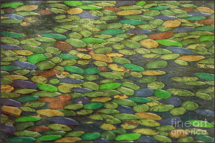 Water Lilies Photograph - Lily Pads by Tom York Images